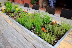tabletop garden on deck