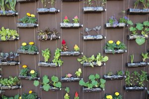 vertical garden hanging on a wall